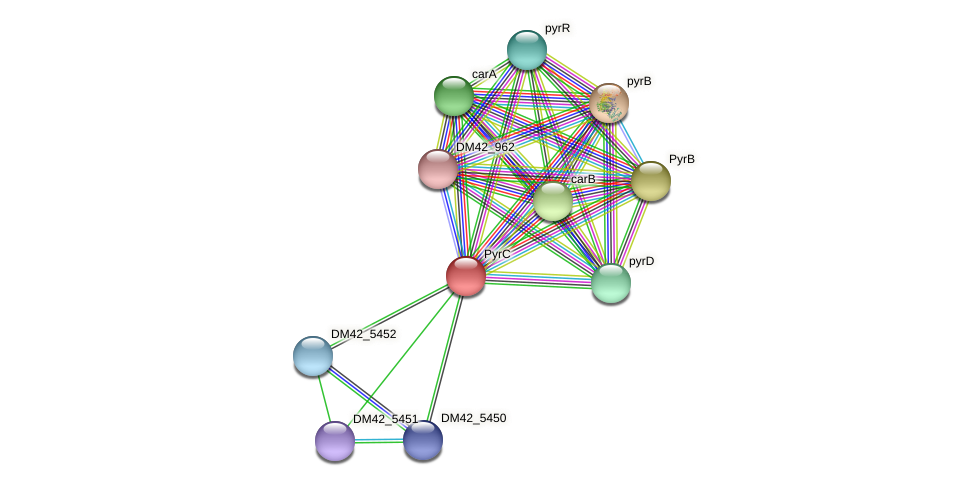 DM42_5454 protein (Burkholderia cepacia) - STRING interaction network
