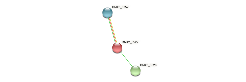 DM42_5527 protein (Burkholderia cepacia) - STRING interaction network