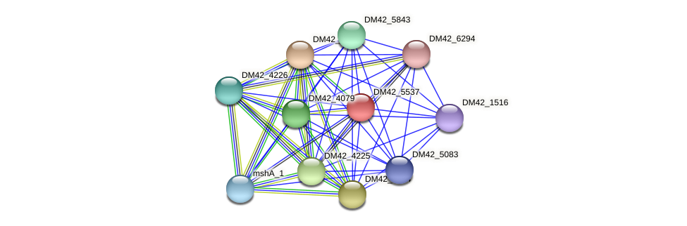 DM42_5537 protein (Burkholderia cepacia) - STRING interaction network