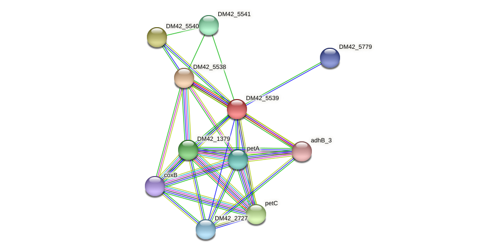 DM42_5539 protein (Burkholderia cepacia) - STRING interaction network