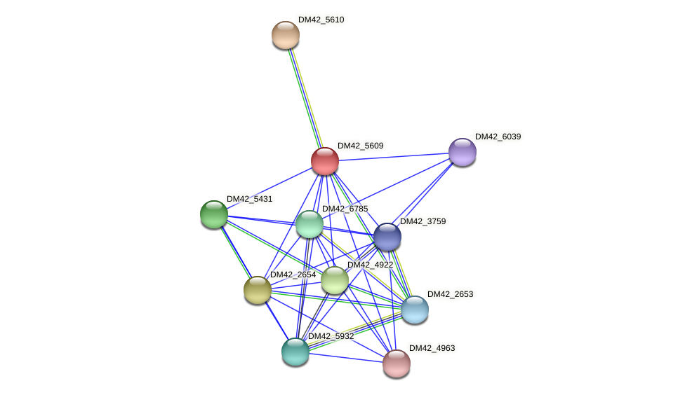 DM42_5609 protein (Burkholderia cepacia) - STRING interaction network