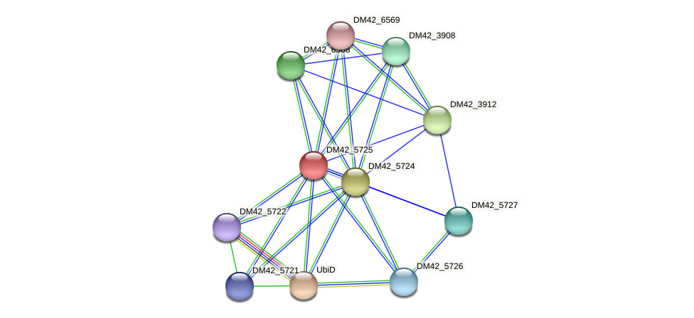 DM42_5725 protein (Burkholderia cepacia) - STRING interaction network