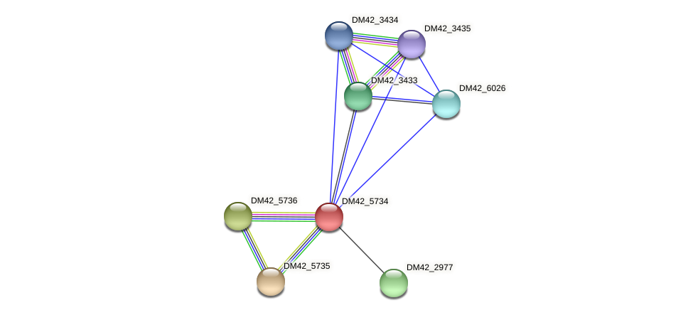 DM42_5734 protein (Burkholderia cepacia) - STRING interaction network
