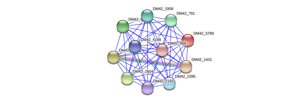 DM42_5789 protein (Burkholderia cepacia) - STRING interaction network