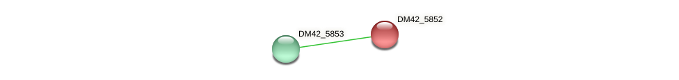 DM42_5852 protein (Burkholderia cepacia) - STRING interaction network