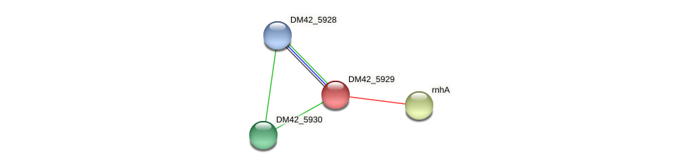DM42_5929 protein (Burkholderia cepacia) - STRING interaction network
