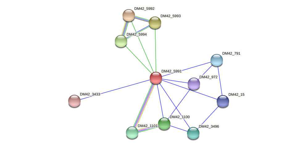 DM42_5991 protein (Burkholderia cepacia) - STRING interaction network