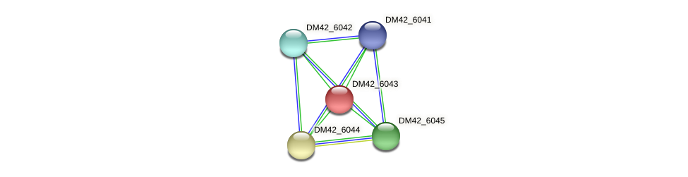 DM42_6043 protein (Burkholderia cepacia) - STRING interaction network