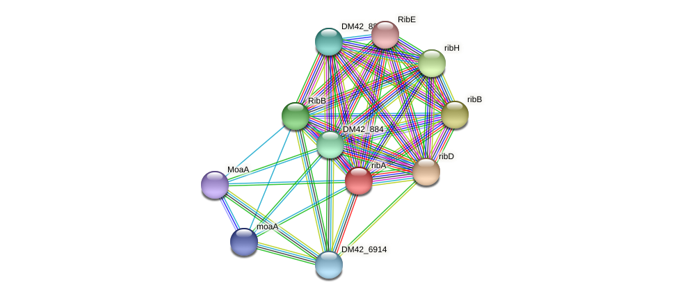 ribA protein (Burkholderia cepacia) - STRING interaction network