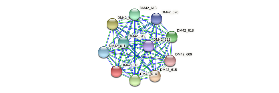 DM42_616 protein (Burkholderia cepacia) - STRING interaction network