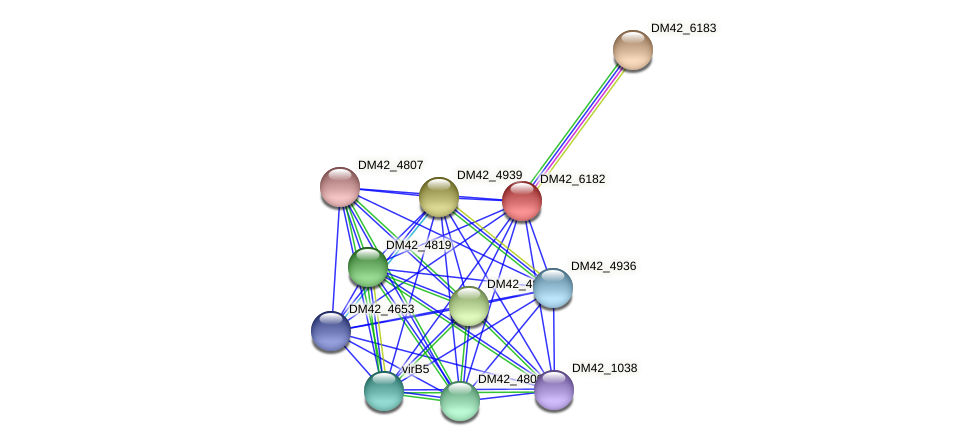 DM42_6182 protein (Burkholderia cepacia) - STRING interaction network