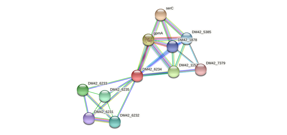 DM42_6234 protein (Burkholderia cepacia) - STRING interaction network
