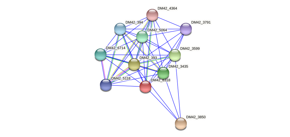 DM42_6318 protein (Burkholderia cepacia) - STRING interaction network