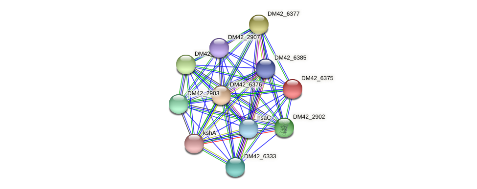 DM42_6375 protein (Burkholderia cepacia) - STRING interaction network