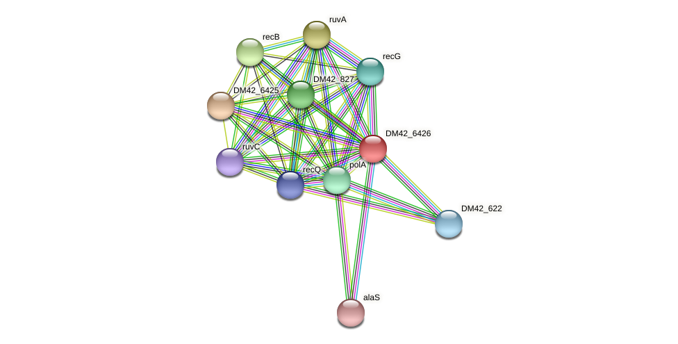 DM42_6426 protein (Burkholderia cepacia) - STRING interaction network