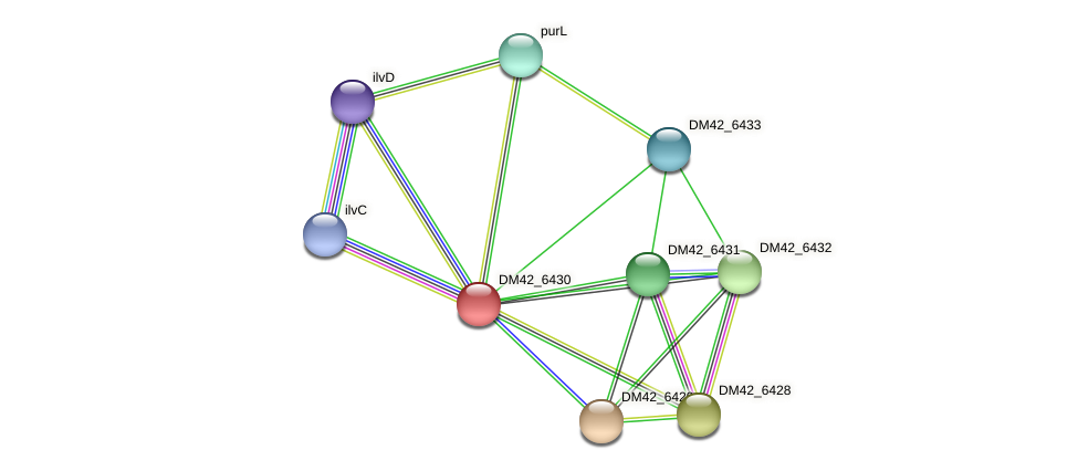 DM42_6430 protein (Burkholderia cepacia) - STRING interaction network