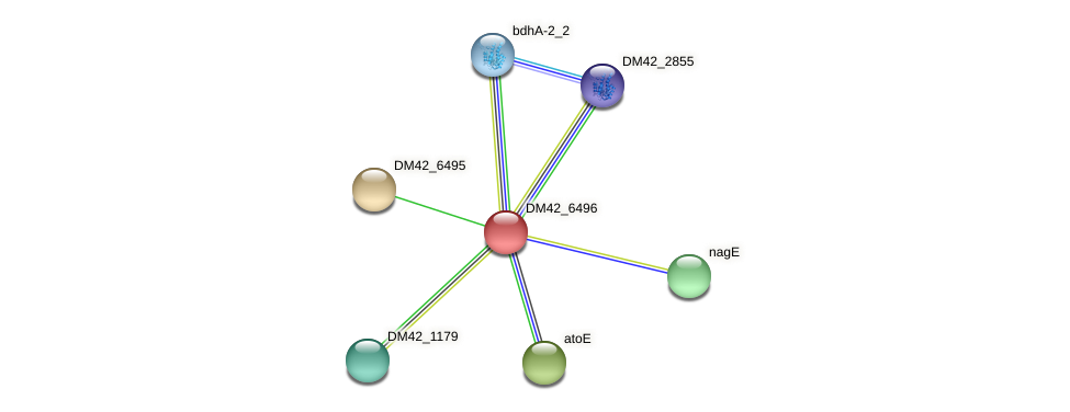 DM42_6496 protein (Burkholderia cepacia) - STRING interaction network
