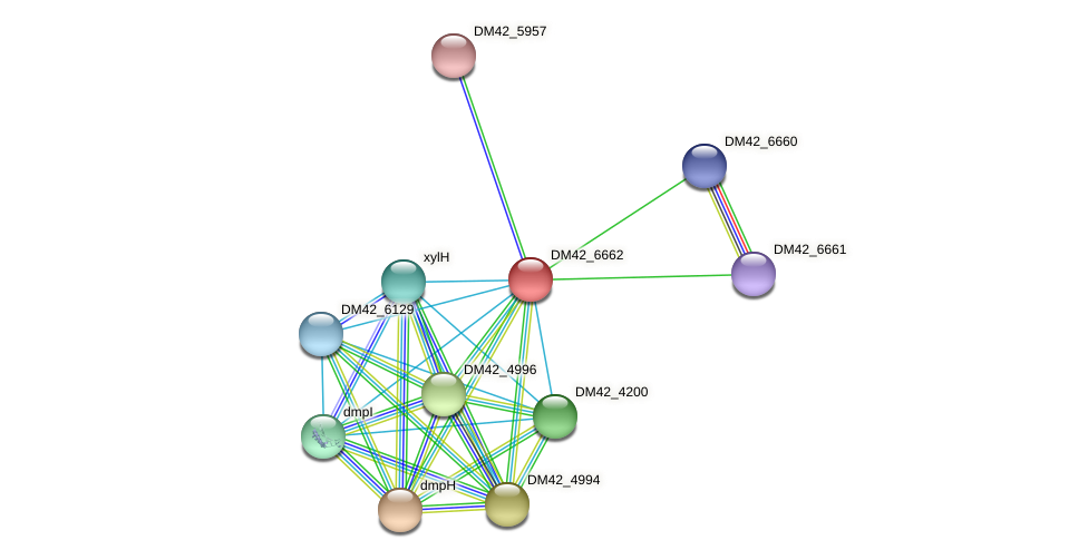DM42_6662 protein (Burkholderia cepacia) - STRING interaction network