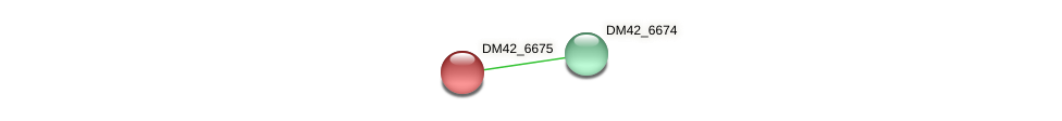 DM42_6675 protein (Burkholderia cepacia) - STRING interaction network