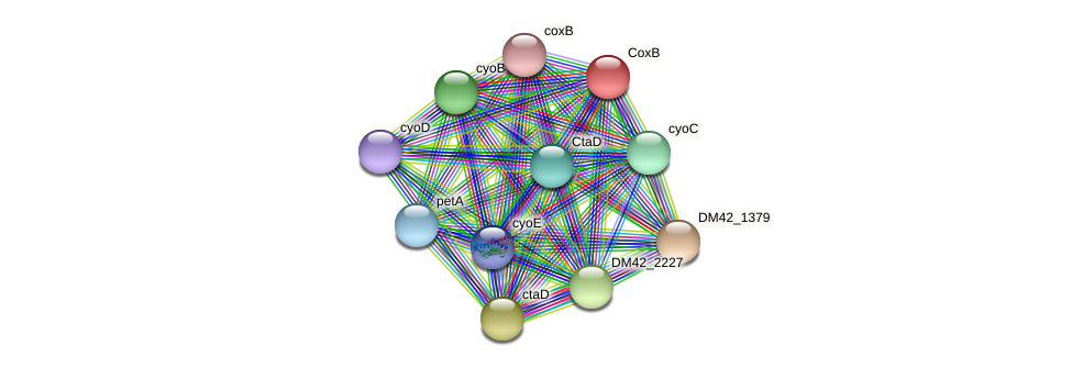 DM42_7052 protein (Burkholderia cepacia) - STRING interaction network