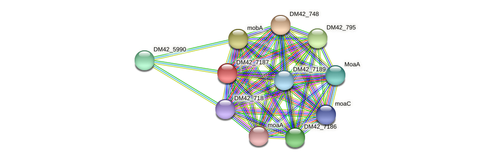 DM42_7187 protein (Burkholderia cepacia) - STRING interaction network
