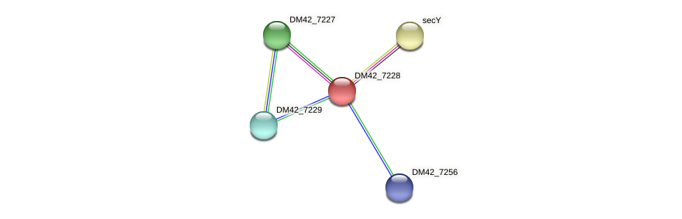 DM42_7228 protein (Burkholderia cepacia) - STRING interaction network