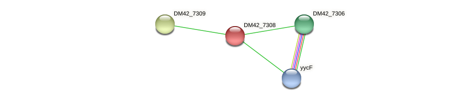 DM42_7308 protein (Burkholderia cepacia) - STRING interaction network