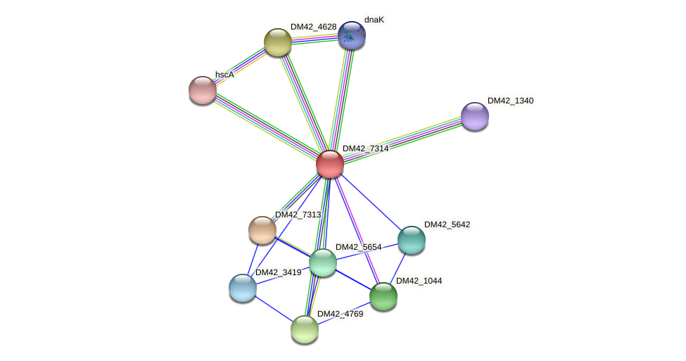 DM42_7314 protein (Burkholderia cepacia) - STRING interaction network