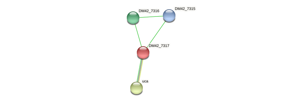 DM42_7317 protein (Burkholderia cepacia) - STRING interaction network