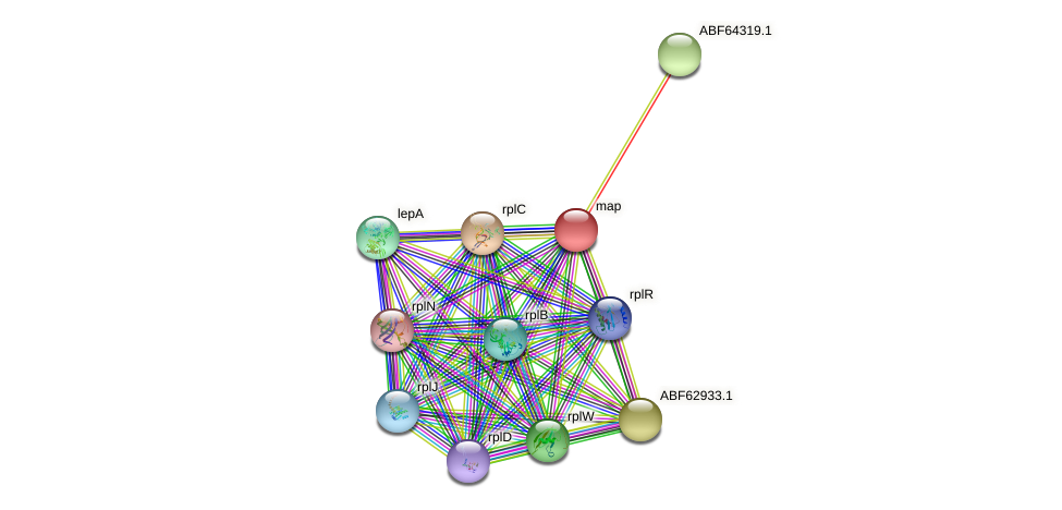map protein (Ruegeria sp. TM1040) - STRING interaction network