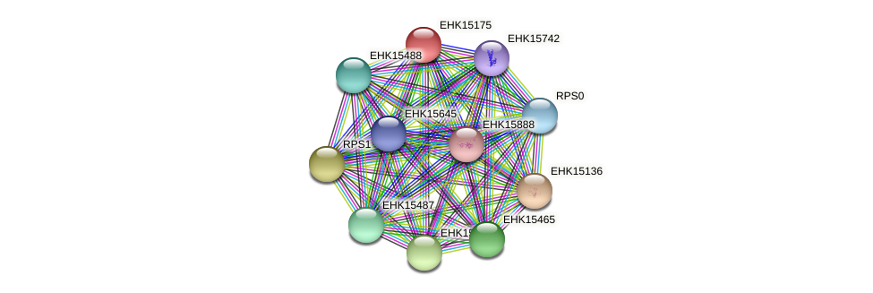EHK15175 protein (Hypocrea virens) - STRING interaction network