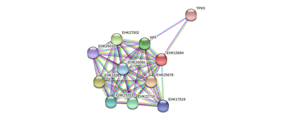 EHK15694 protein (Hypocrea virens) - STRING interaction network