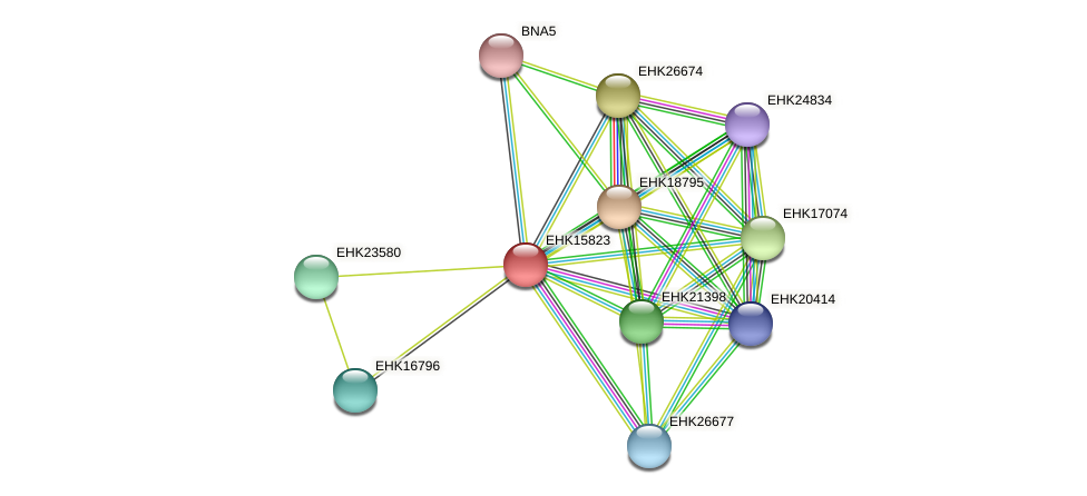 EHK15823 protein (Hypocrea virens) - STRING interaction network