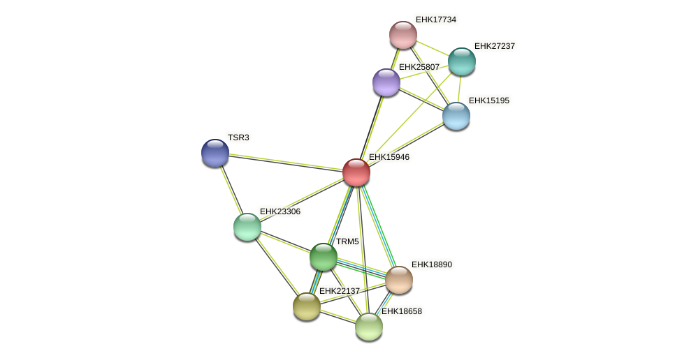 EHK15946 protein (Hypocrea virens) - STRING interaction network