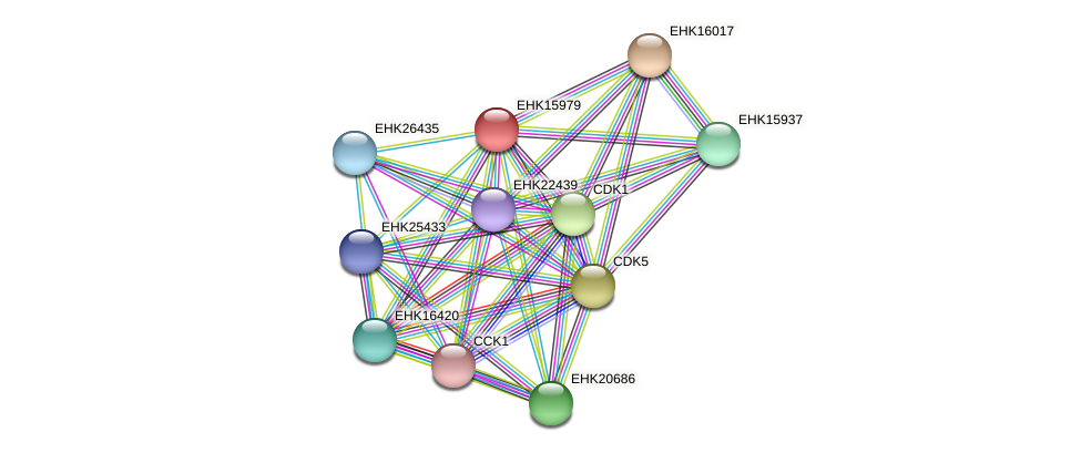 EHK15979 protein (Hypocrea virens) - STRING interaction network