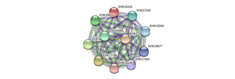 EHK16116 protein (Hypocrea virens) - STRING interaction network