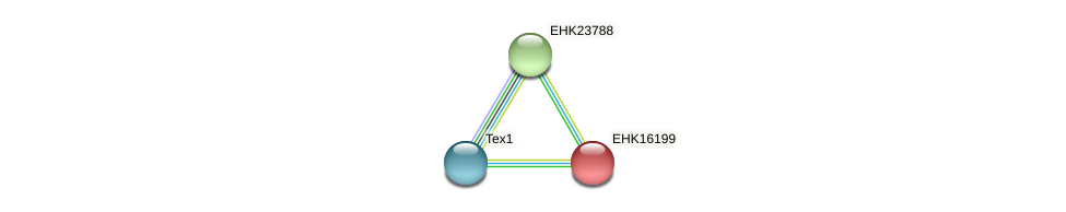 EHK16199 protein (Hypocrea virens) - STRING interaction network