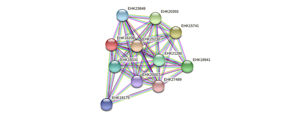 EHK16208 protein (Hypocrea virens) - STRING interaction network