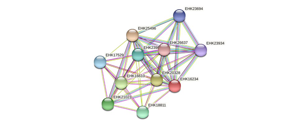EHK16234 protein (Hypocrea virens) - STRING interaction network