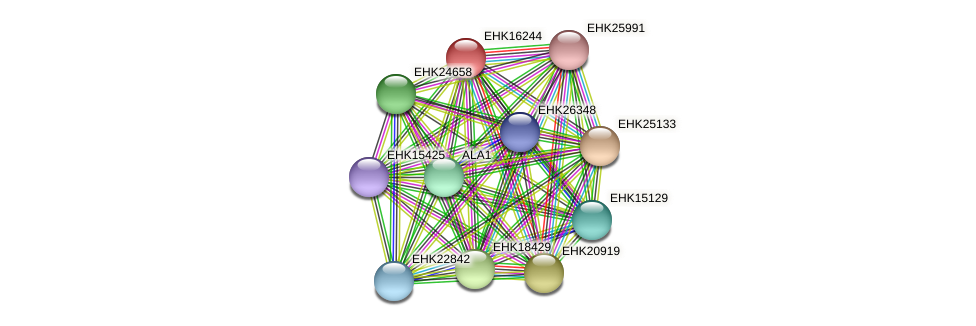 EHK16244 protein (Hypocrea virens) - STRING interaction network