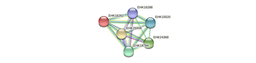 EHK16262 protein (Hypocrea virens) - STRING interaction network