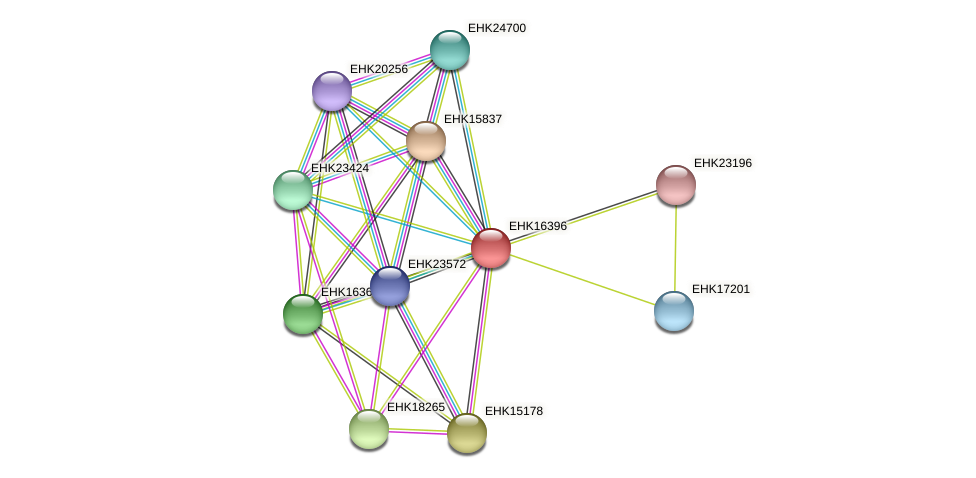 EHK16396 protein (Hypocrea virens) - STRING interaction network