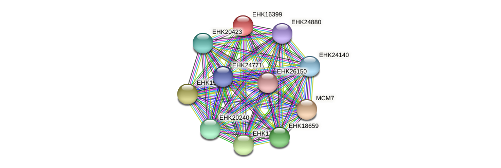EHK16399 protein (Hypocrea virens) - STRING interaction network