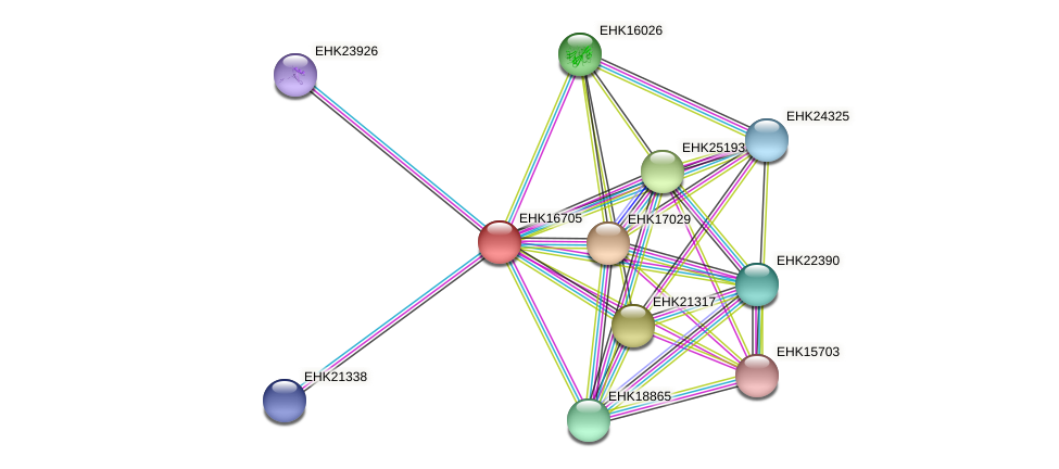 EHK16705 protein (Hypocrea virens) - STRING interaction network