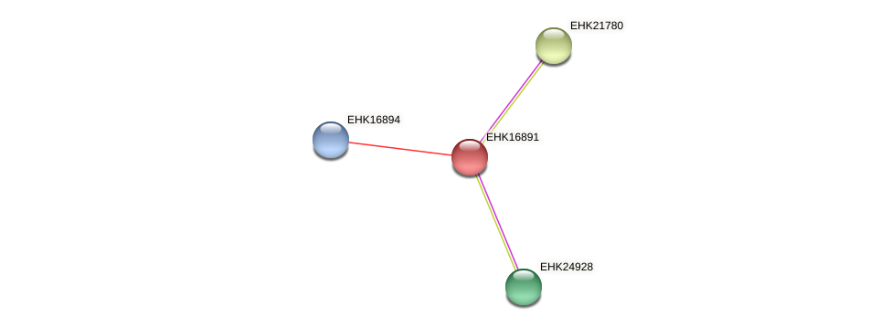 EHK16891 protein (Hypocrea virens) - STRING interaction network