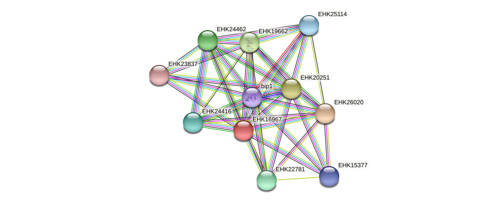 EHK16967 protein (Hypocrea virens) - STRING interaction network