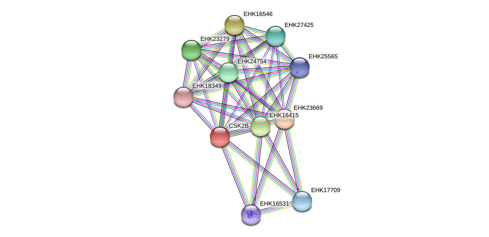 CSK2B protein (Hypocrea virens) - STRING interaction network