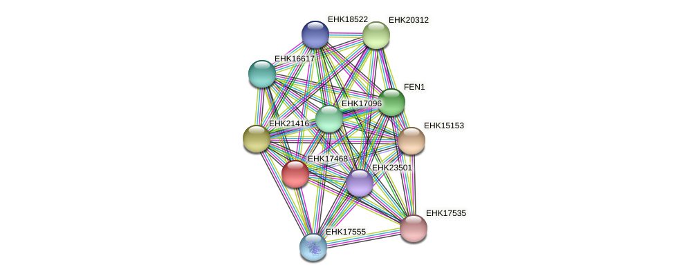 EHK17468 protein (Hypocrea virens) - STRING interaction network