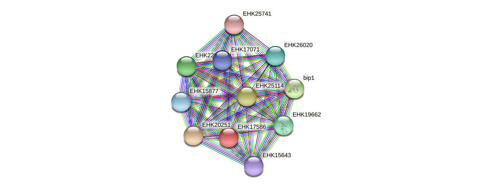 EHK17586 protein (Hypocrea virens) - STRING interaction network
