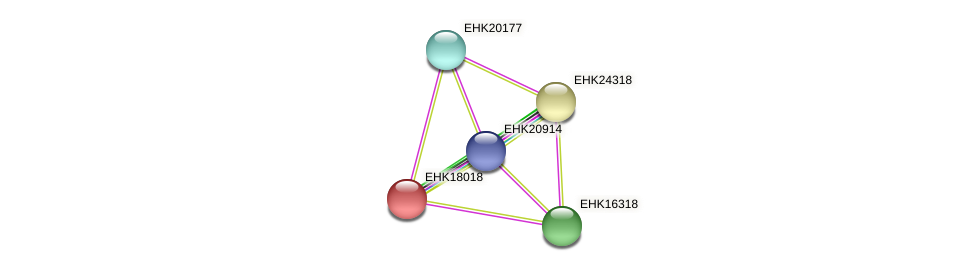 EHK18018 protein (Hypocrea virens) - STRING interaction network